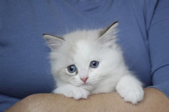 今日の仔猫達  モナちゃん_a0285571_22544015.jpg