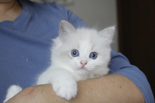 今日の仔猫達  モナちゃん_a0285571_22545009.jpg