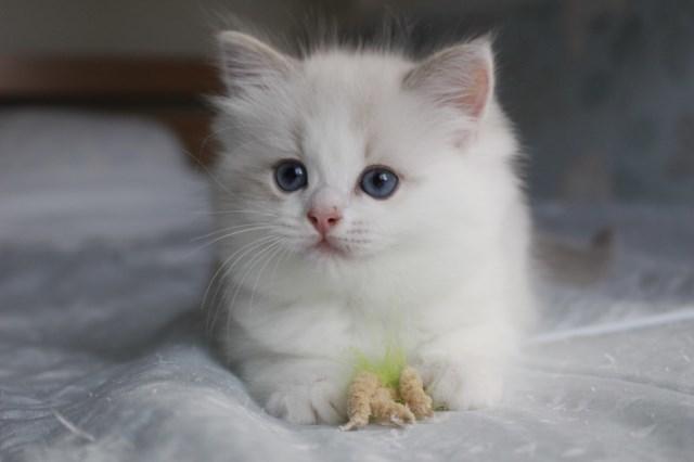 今日の仔猫達  モナちゃん_a0285571_22545646.jpg