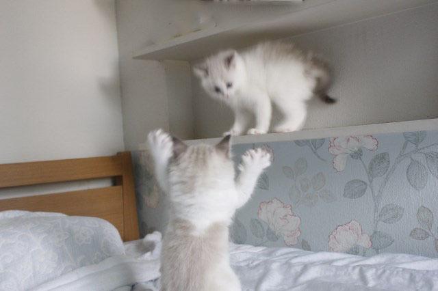 今日の仔猫達  モナちゃん_a0285571_22551266.jpg