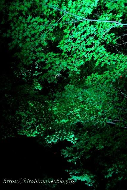 かまくら 長谷の灯かり 長谷寺_f0374092_21414362.jpg