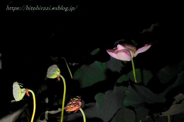 かまくら 長谷の灯かり 長谷寺_f0374092_21432305.jpg