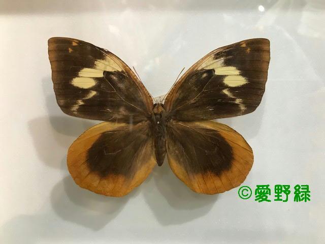 c0048196_20281259.jpg