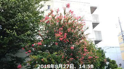 d0051601_22385606.jpg