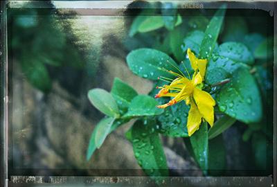 くまもと梅雨時と夏の草花2018(1)_b0133911_18501454.jpg