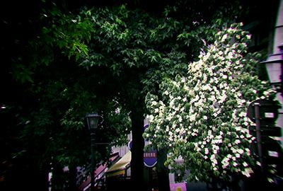 くまもと梅雨時と夏の草花2018(1)_b0133911_18575179.jpg