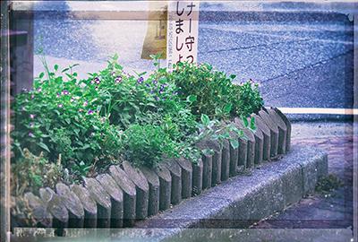 くまもと梅雨時と夏の草花2018(1)_b0133911_19053937.jpg