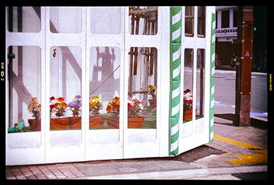 くまもと梅雨時と夏の草花2018(1)_b0133911_19054329.jpg