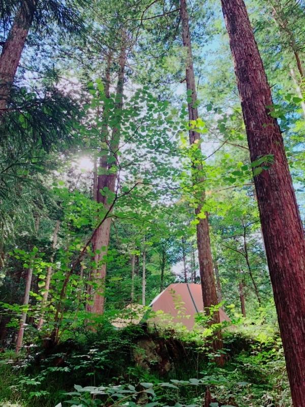 「森の中に住む」_b0131012_16163458.jpg