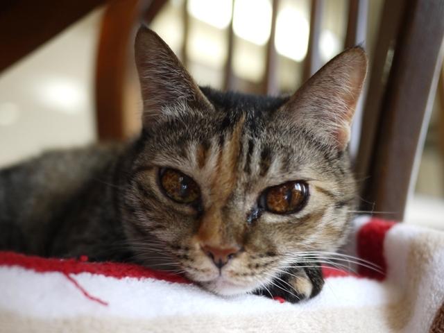 猫のお留守番 天ちゃん麦くん茶くん編。_a0143140_22021587.jpg