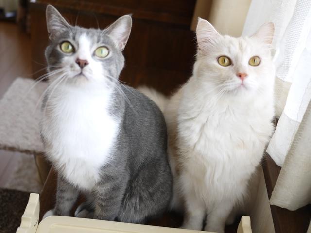 猫のお留守番 天ちゃん麦くん茶くん編。_a0143140_22034443.jpg