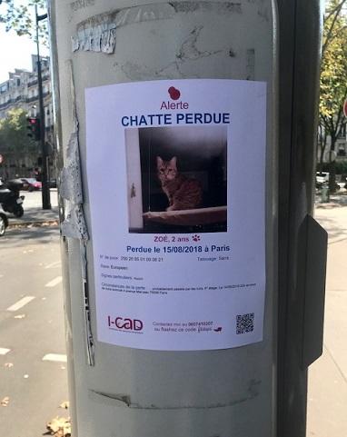 パリの迷い猫・猫九寸+米沢糸織・明日から九月仕入れへ_f0181251_1632134.jpg