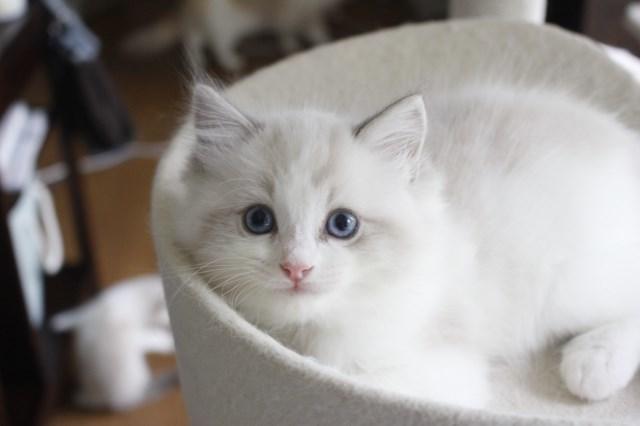 7月9日生まれ 今日の子猫達_a0285571_22564245.jpg