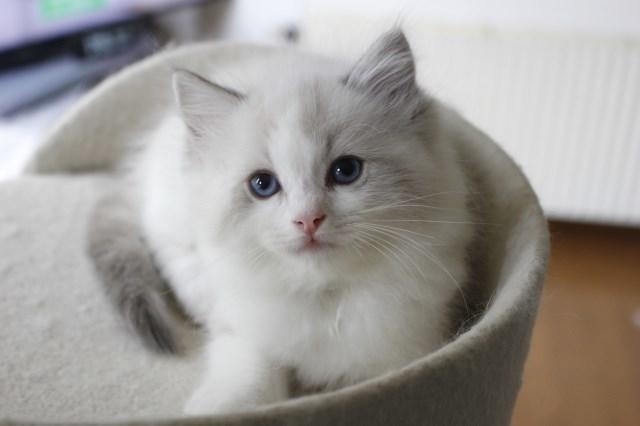 7月9日生まれ 今日の子猫達_a0285571_22564745.jpg