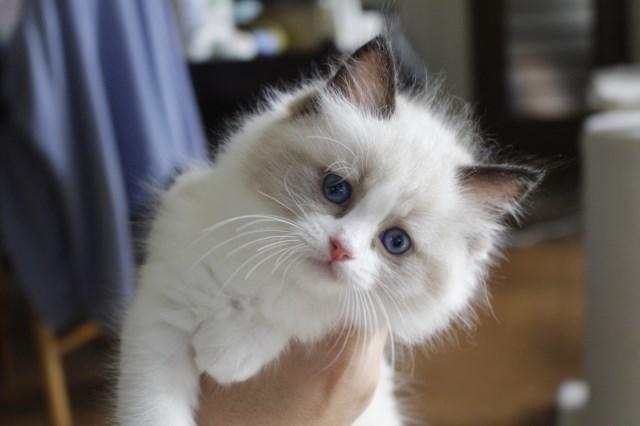 7月9日生まれ 今日の子猫達_a0285571_22565337.jpg