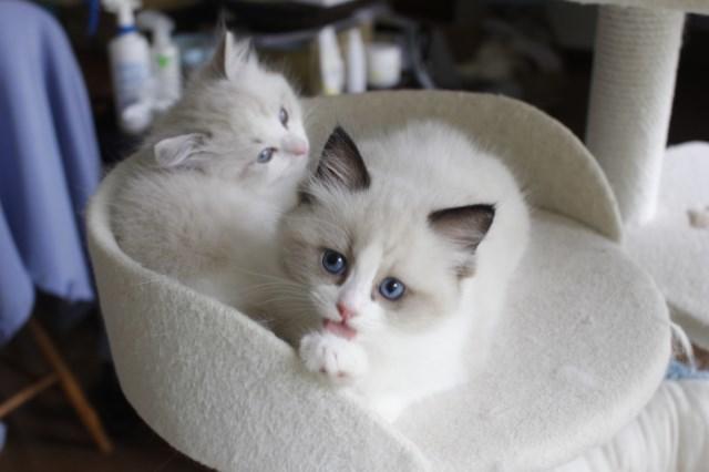 7月9日生まれ 今日の子猫達_a0285571_22565855.jpg