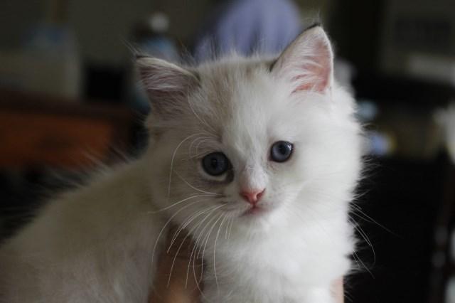 7月9日生まれ 今日の子猫達_a0285571_22571073.jpg