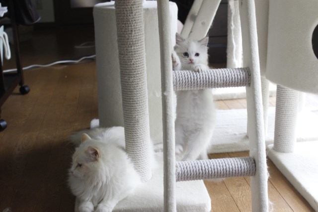 7月9日生まれ 今日の子猫達_a0285571_22571599.jpg