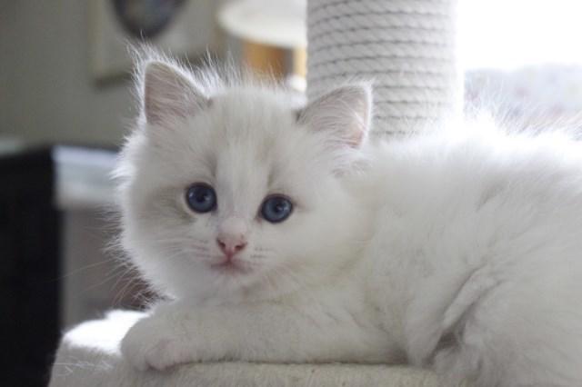 7月9日生まれ 今日の子猫達_a0285571_22572663.jpg