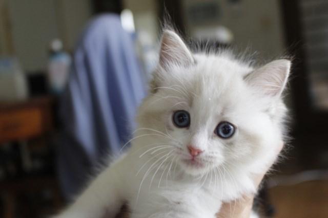7月9日生まれ 今日の子猫達_a0285571_22573129.jpg
