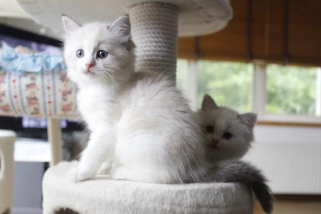 7月9日生まれ 今日の子猫達_a0285571_22573712.jpg