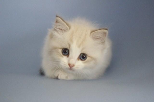 7月9日生まれ 今日の子猫達_a0285571_22574872.jpg