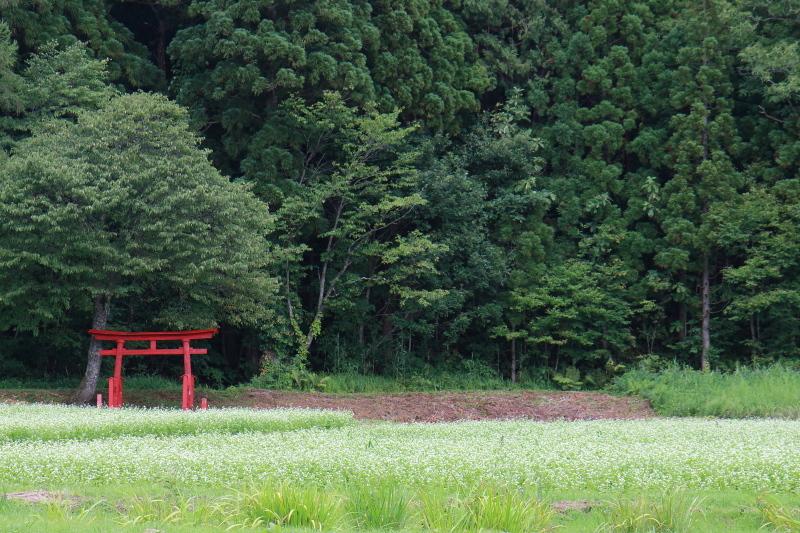 西和賀町沢内の蕎麦の花 2_e0165983_11105351.jpg