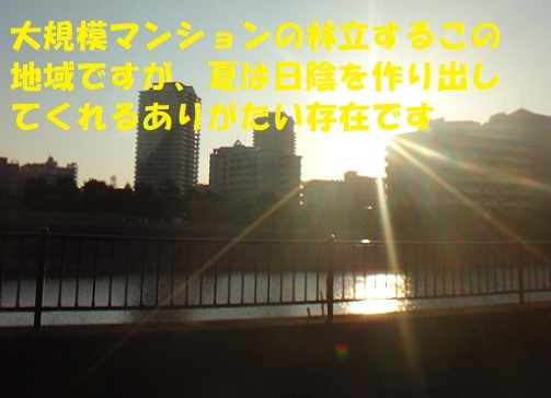 f0121712_10331185.jpg