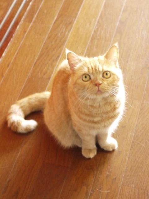 猫のお留守番 みかんちゃん編。_a0143140_23054181.jpg
