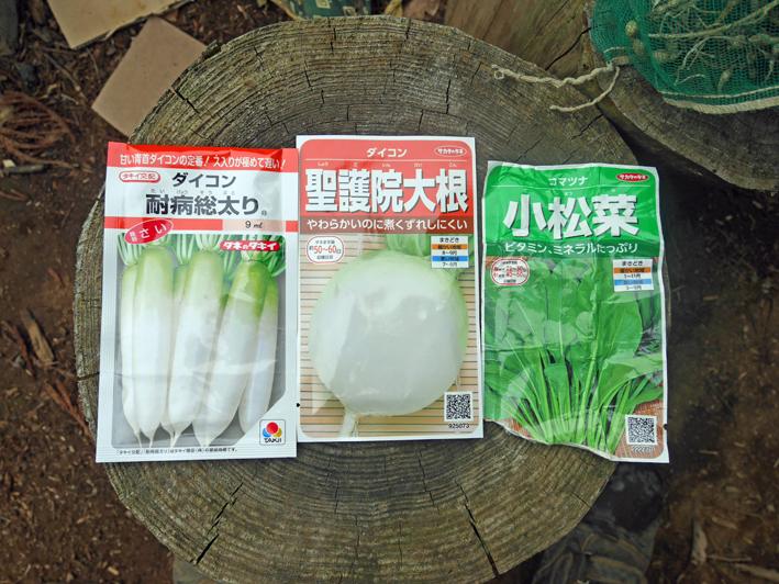 ダイコン種蒔き(8・28)、秋ジャガ種芋植え付け(8・30)_c0014967_11561393.jpg