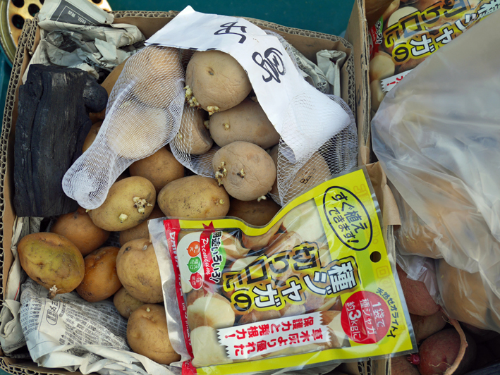 ダイコン種蒔き(8・28)、秋ジャガ種芋植え付け(8・30)_c0014967_12004167.jpg