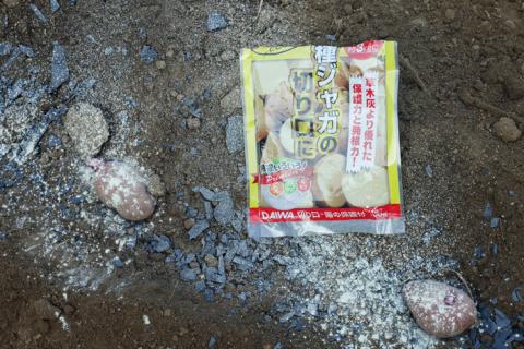 ダイコン種蒔き(8・28)、秋ジャガ種芋植え付け(8・30)_c0014967_12012781.jpg