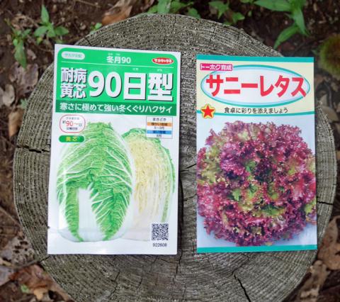 ダイコン種蒔き(8・28)、秋ジャガ種芋植え付け(8・30)_c0014967_12033371.jpg