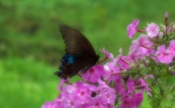 花と蝶_d0162994_08384554.jpg