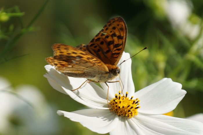 花と蝶_d0162994_08391837.jpg