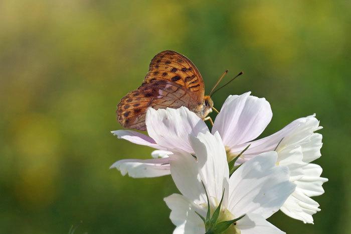 花と蝶_d0162994_08401511.jpg
