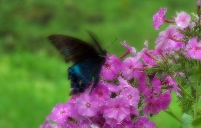 花と蝶_d0162994_08404359.jpg