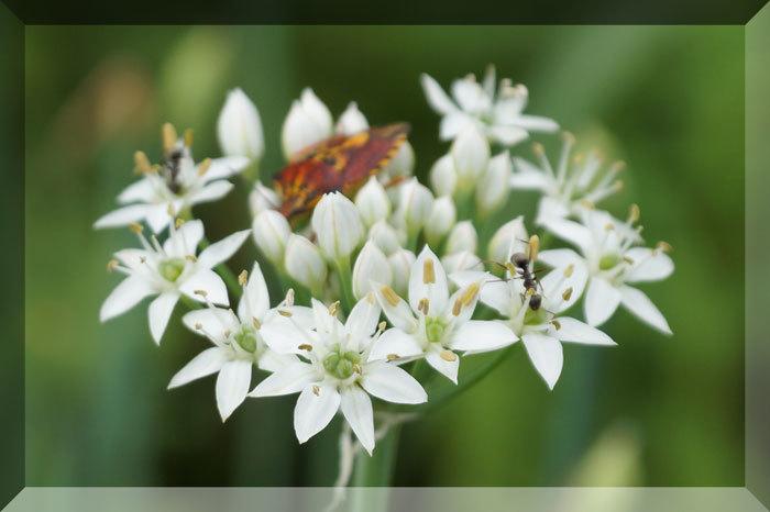 花と蝶_d0162994_08410903.jpg