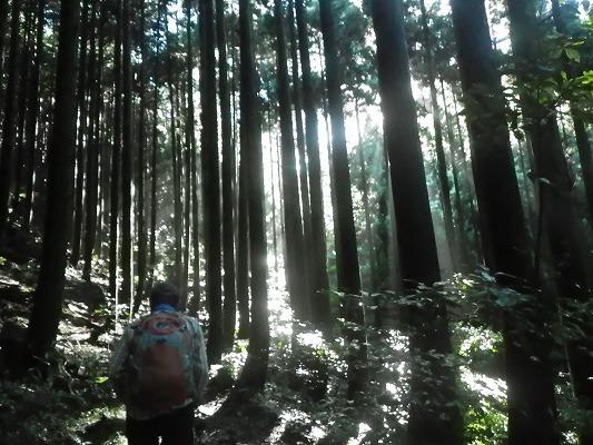18-9:経ヶ岳(また、シュスラン堪能)  _f0187402_21101921.jpg