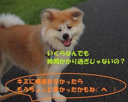 f0121712_01084457.jpg