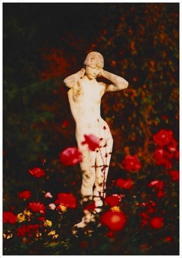 昨年の秋バラを思う_a0134114_09435364.jpg