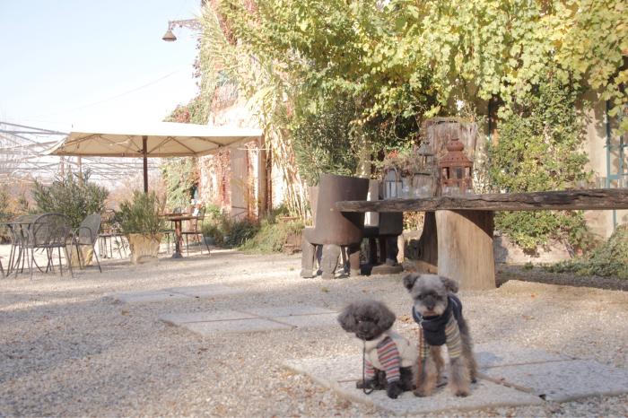 イヌと行くイタリア旅らしく…_b0083925_16351666.jpg