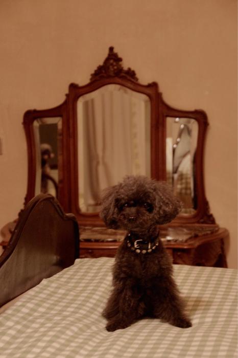 イヌと行くイタリア旅らしく…_b0083925_16385792.jpg