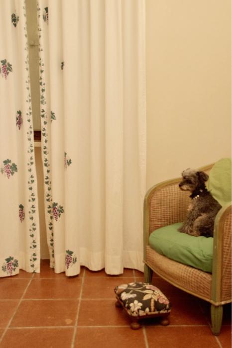イヌと行くイタリア旅らしく…_b0083925_16401764.jpg