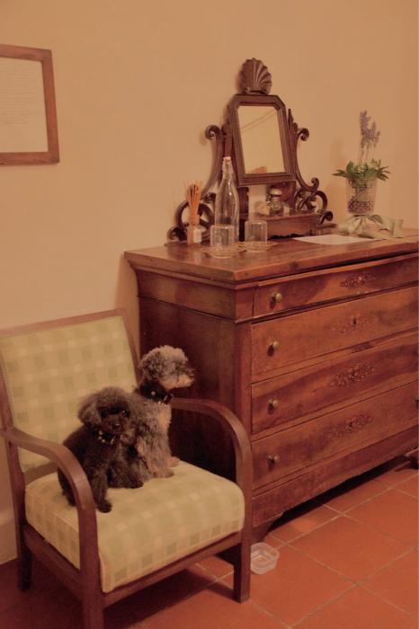 イヌと行くイタリア旅らしく…_b0083925_16443377.jpg