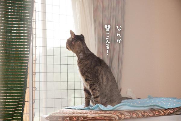 窓の外から_d0355333_18515653.jpg