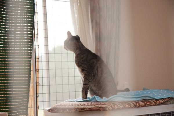 窓の外から_d0355333_18515898.jpg