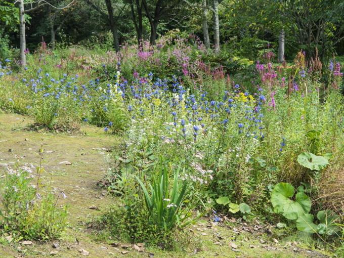 """ひさびさの十勝晴れ・・秋の花咲く""""六花の森""""を散策してみました。_f0276498_23212353.jpg"""