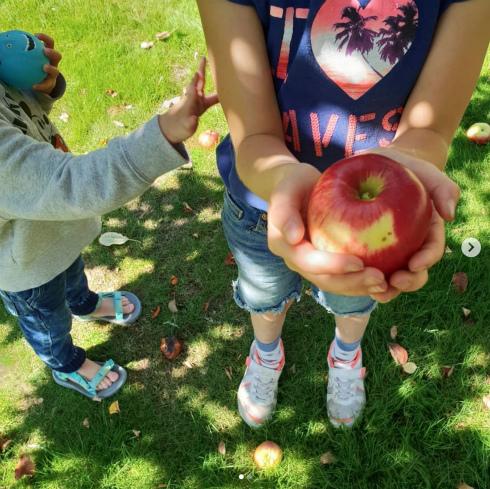 収穫の季節。りんご編。_a0215008_02481507.jpg