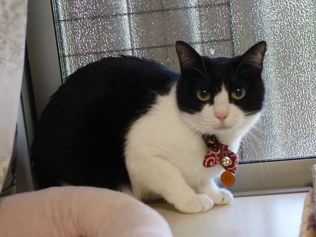 猫のお留守番 福未ちゃん編。_a0143140_23244204.jpg